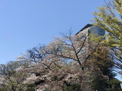 20190416sakura